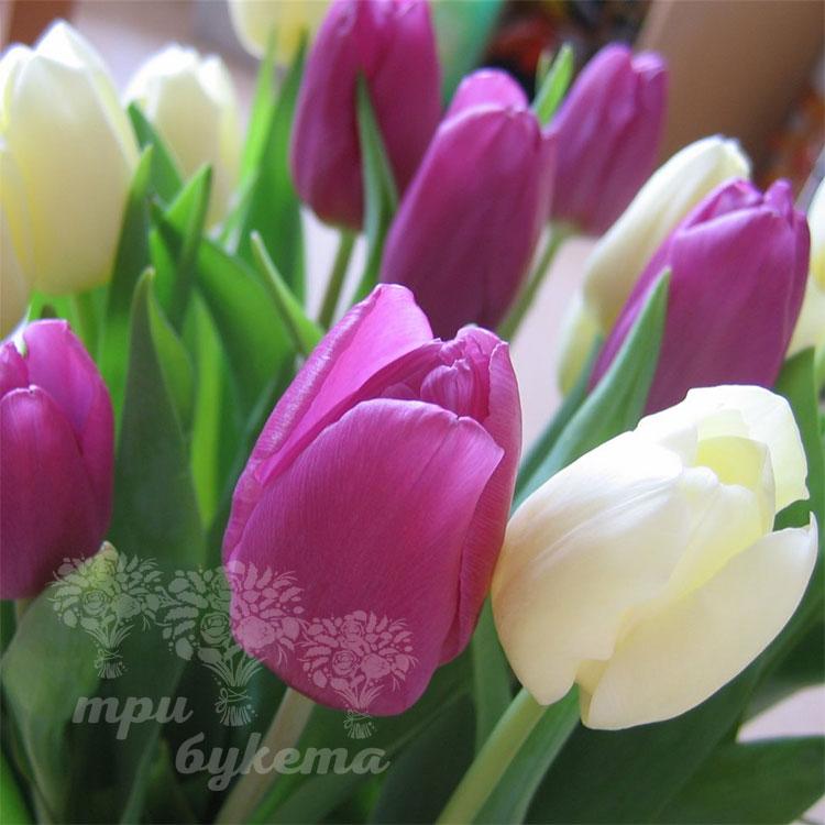 Тюльпаны поштучно
