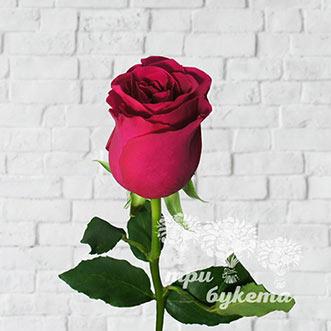 Кенийская роза поштучно